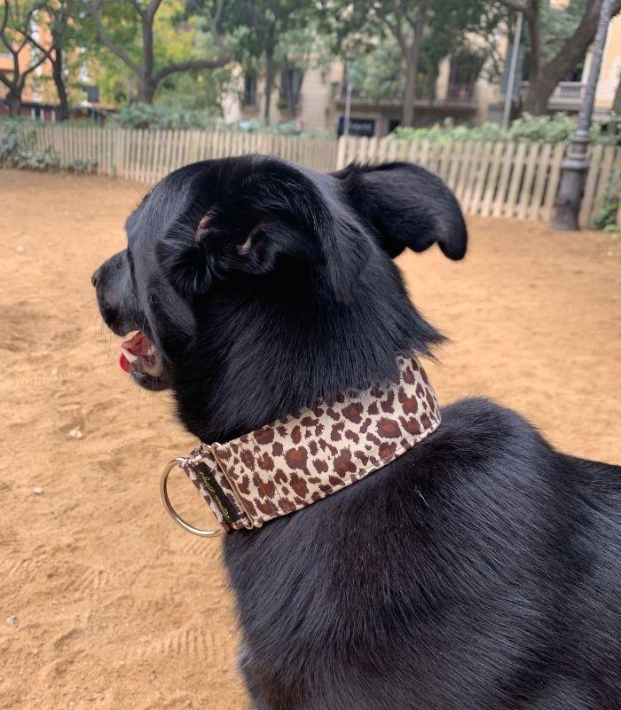 collar martingale leopardo - Bruce